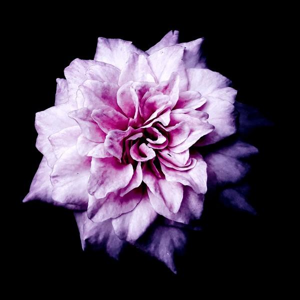 flowers-105